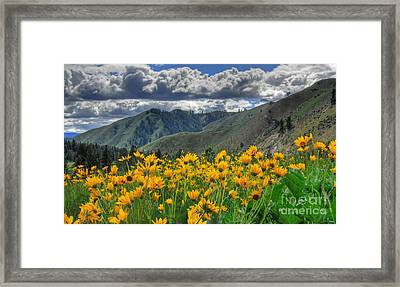 Springtime At Gallagher Framed Print