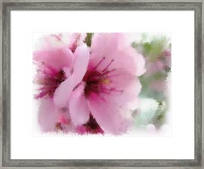 Springtime Beauty Framed Print by Renee Skiba