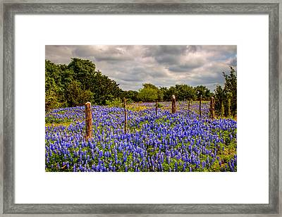 Springtime Beauty Framed Print