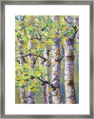 Springtime Birches Framed Print by Karen Mattson