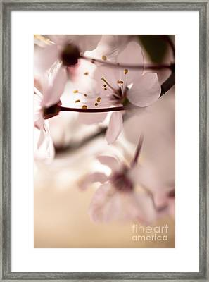 Springtime Blossom Framed Print by Jan Bickerton