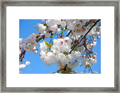 Springtime Blossoms Framed Print by Richard Hinger