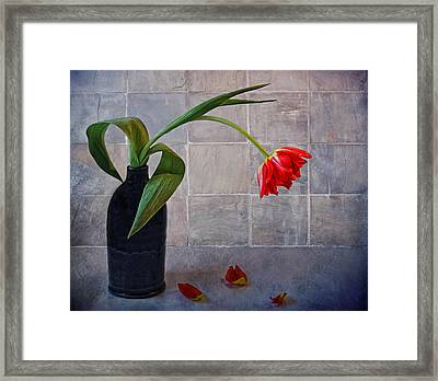 Springtime Blues Framed Print by Claudia Moeckel