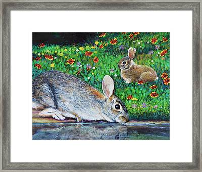 Springtime Cottontail Rabbits Framed Print by Charles Wallis