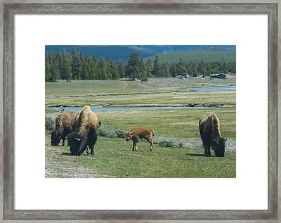 Springtime Crop Framed Print