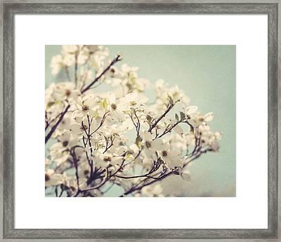 Springtime Dogwood Framed Print by Lisa Russo