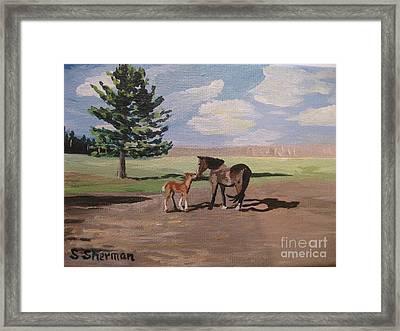 Springtime Foal Framed Print