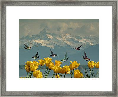 Springtime Humming Bird Lunch Framed Print by Movie Poster Prints