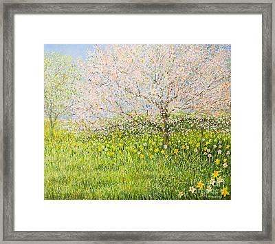 Springtime Impression Framed Print by Kiril Stanchev