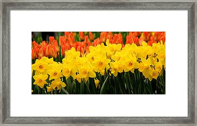 Springtime In Amsterdam Framed Print