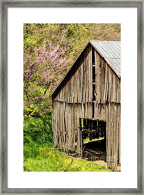 Springtime In Kentucky Framed Print
