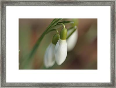 Springtime In Motion Framed Print