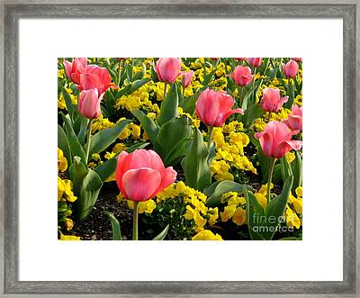 Springtime In South Framed Print