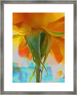 Spring In Summer Framed Print by Brooks Garten Hauschild