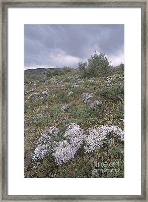 Springtime In The Idaho High Desert Framed Print by William H. Mullins
