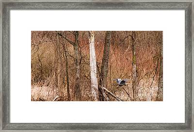 Springtime In The Marshes Framed Print by Mary Lou Chmura