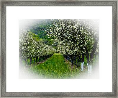 Springtime In The Orchard Framed Print by Bill Gallagher