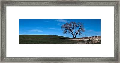 Springtime In The Palouse Framed Print