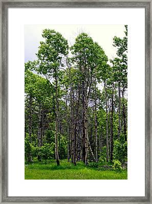 Springtime In The Sierras Framed Print by Lynn Bawden