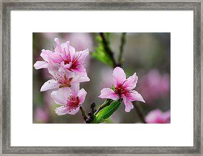Framed Print featuring the photograph Springtime In The South by Amee Cave