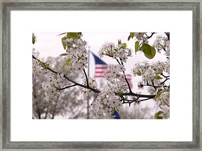Springtime In The South Framed Print