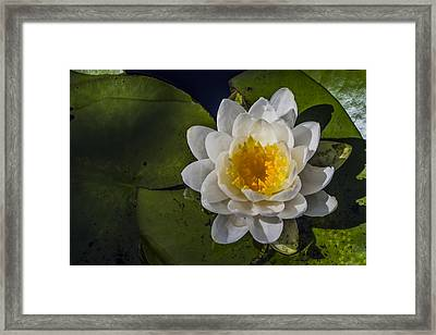 Springtime In The Swamp Framed Print by Andrew Pacheco