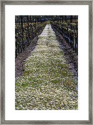 Springtime In The Vineyards Framed Print by Garry Gay