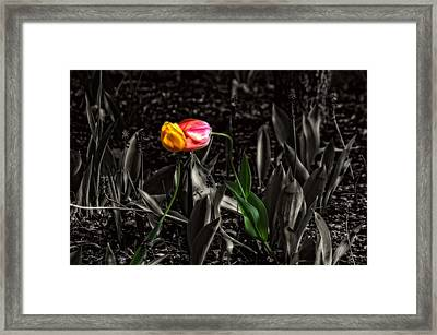 Springtime Kiss Framed Print by Dan Quam