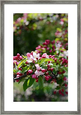 Framed Print featuring the photograph Springtime by Linda Mishler