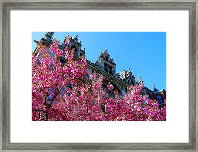 Springtime On Commonwealth Avenue Framed Print