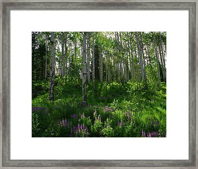 Springtime On The Grand Mesa Framed Print by Ernie Echols