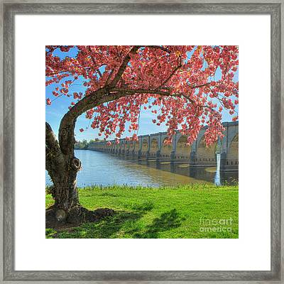 Springtime On The River Framed Print