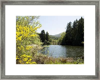 Springtime Phoenix Lake Framed Print by Juan Romagosa