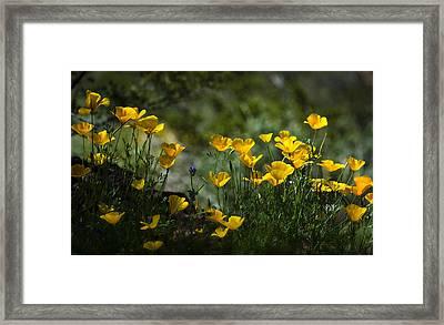 Springtime Poppies  Framed Print by Saija  Lehtonen