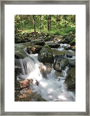Springtime Stream Framed Print by Tammy Davis