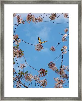 Heaven Sent Framed Print