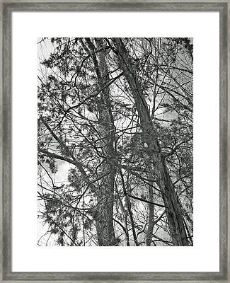 Springtime Woods - New Jesey Pine Barrens - Black And White Framed Print by Mother Nature