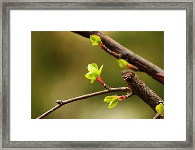 Sprout  Framed Print by Phoresto Kim