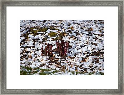 Sprouting In A Blanket Of Petals Framed Print