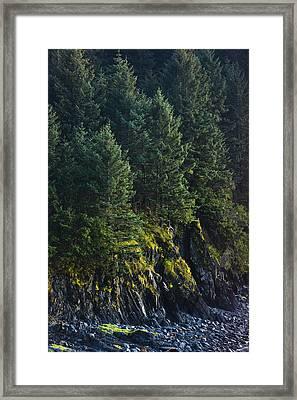 Spruce Tree Forest, Chiniak Bay, Kodiak Framed Print by Kevin Smith