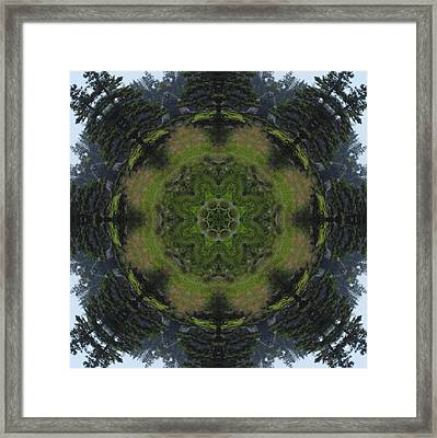 Spruce Tree Twins Framed Print