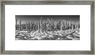 Spruce Trees On A Snow Covered Framed Print