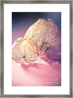 Spun Sugar Framed Print by Jan Bickerton