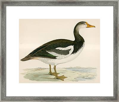 Spur Winged Goose Framed Print by Beverley R Morris