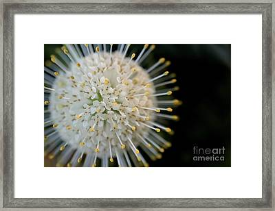 Sputnik Framed Print by Kenny Glotfelty