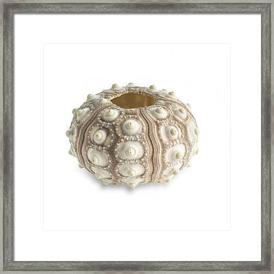 Sputnik Sea Urchin Shell Framed Print