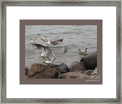 Squabbling Gulls Framed Print by Patricia Overmoyer