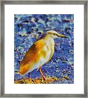 Squacco Heron Framed Print by George Rossidis