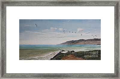 Squadron Of Pelicans Central Califonia Framed Print