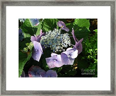Square Dance Framed Print